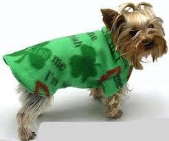 when irish dogs are smiling 12 fun st patrick u0027s day dog costumes