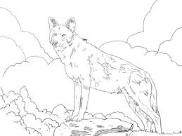 north american red wolf coloring free printable coloring pages