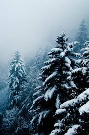 best 25 snow covered trees ideas on snowy forest