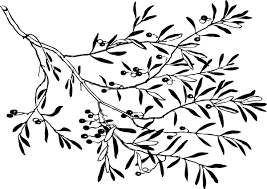 black and white olive branch clip at clker com vector clip
