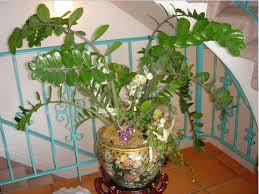 low light house plants garden help desk growing indoor plants with low light community