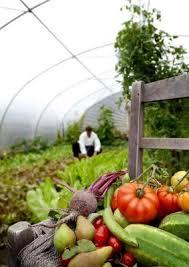 farm to table concept farm to table concept