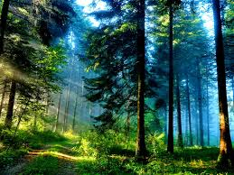 forest shine forest grass path trees sun summer nature beautiful