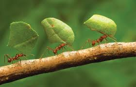 Ants In Bathtub Humans Would Not Exist Without These 5 Animals One Green Planet