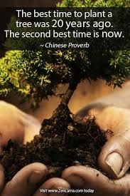 daily inspiration quote the best time to plant a tree was 20 years