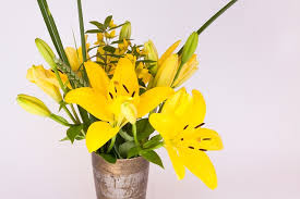 flowers as thanksgiving day gift