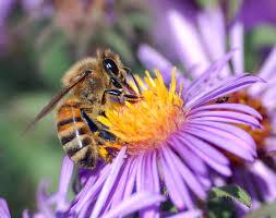 honey bees u2013 a blessing of god gipl