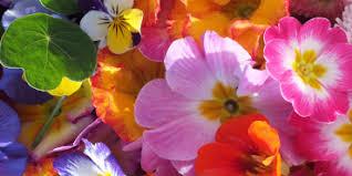 organic edible flowers maddocks farm organics buy edible flowers online