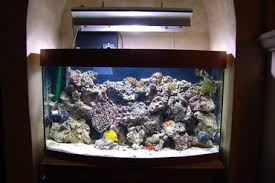 Live Rock Aquascaping How To Cure Your Live Rock Before Placing It In Your Aquarium