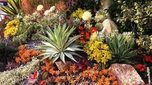 san diego county native plants which plants to plant in san diego area how to grow best usage