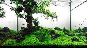 Amano Aquascaping Aquarium Photography Tutorial For Aquascaping Scapefu