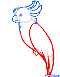how to draw a cockatoo step by step birds animals free online