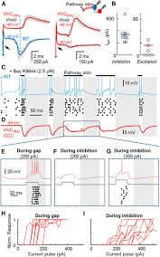 interplay of inhibition and excitation shapes a premotor neural