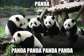 Memes De Pandas - el panda el animal de compañia que todo ser humano debe querer y