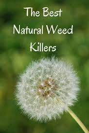 weed killer for vegetable garden uk home outdoor decoration