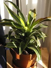 plantes dépolluantes chambre à coucher une plante pour chaque pièce