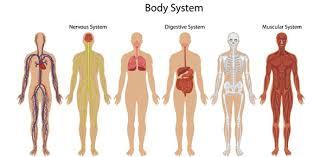 body systems quiz proprofs quiz