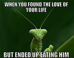 Mantis Meme - mystic mantis memes home facebook
