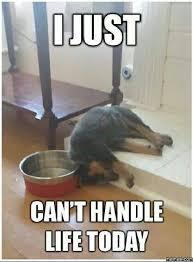 Meme Fail - funny dog fail meme