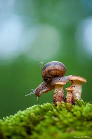 494 best snails u0026 forest life images on pinterest nature fungi