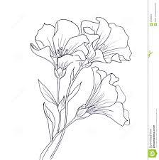 line ink drawing of flower stock illustration image 62588984
