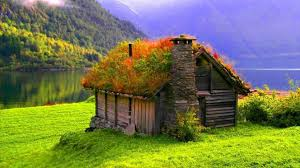 houses crazy roof hut lakeside grass lae plants shore dual