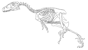 skeleton coloring cute dinosaur skeleton coloring pages images dashah beauty