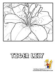 Hard Flower Coloring Pages - luxurious coloring flower picture lily free flower coloring