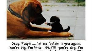 boxer dog howling mythical black lupus nature spirit dog animal canis arctic