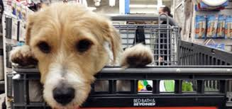 bed bath and beyond norfolk nyc bed bath and beyond stores welcome four legged shopping