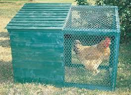 gabbia per pulcini galline ovaiole e pulcini guida completa all allevamento