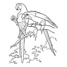 25 cute parrot coloring pages toddler love color