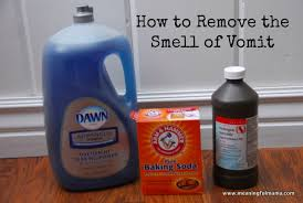 How To Get Dry Stains Out Of Carpet How To Remove The Vomit Smell From Anything