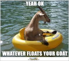 Funny Animal Memes Tumblr - whatever floats your goat funny meme