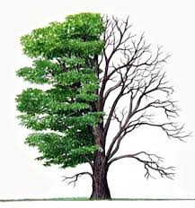 paul carroll tree surgeon