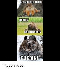 Bear Cocaine Meme - whatcha thinkin about nothin just bear stuffs loluk cocaine