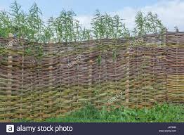 living willow fence stock photos u0026 living willow fence stock