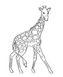 nice giraffe coloring pages cool ideas 1065 unknown resolutions