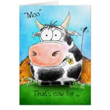 cow greeting cards happy birthday cows greeting cards zazzle