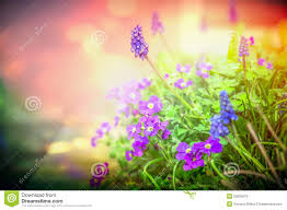 purple garden flowers in back light on blurred nature background