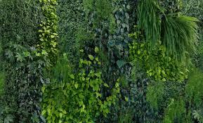 green wall mr perswall mr perswall