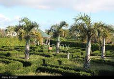 Bermuda Botanical Gardens Horseshow Botanical Gardens Stallard Bermuda Pinterest
