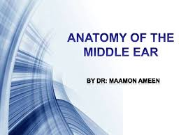 Attic Ear Anatomy Middle Ear Anatomy