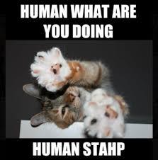Stahp Meme - human stahp