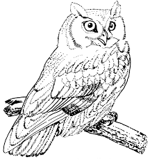 animal printable owl coloring pages owl coloring pages animals
