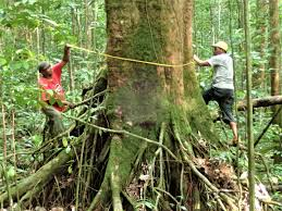 home global trees