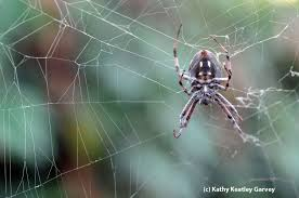 why spiders are not insects bug squad anr blogs
