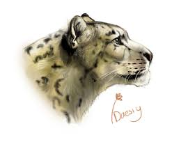 snow leopard sketch details by daesiy on deviantart