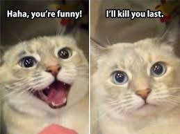 Mean Cat Meme - funny mean cat pictures funny pics story