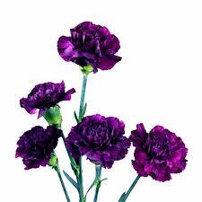 purple carnations moonvista purple standard carnations wholesale fancy grade